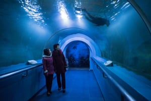 Visitors look at a diver in a tank at an aquarium in the Central Zoo, near Mt. Taesong, downtown Pyongyang