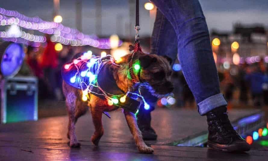 Dog with fairy lights on at LumiDog event, Blackpool
