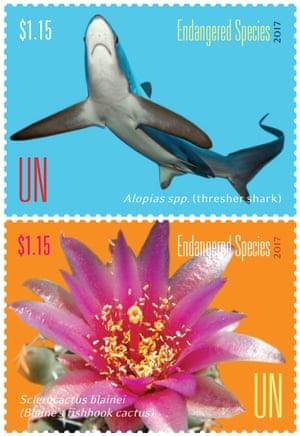 Thresher sharks and Blaine's pincushion (Sclerocactus blainei)