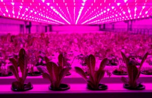 Kaarst, Germany: A four-level 30 square metre large container with 900 plants is lit by LED lights outside an IKEA store during a test of container farming technologies