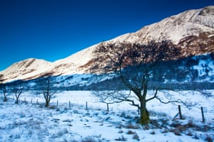 Trees under the shadow of Carn Dearg, Glen Nevis, Scotland.