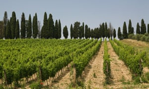 View from a country lane of typical Tuscan countryside of olive groves and vineyards, with trees lining the horizon.