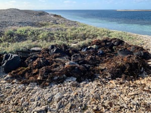 The drugs hidden under seaweed. About 40 bags were located, with preliminary tests suggesting the haul included cocaine and ecstasy illicit drugs.