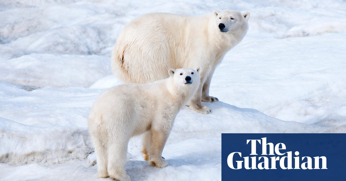 What polar bears in a Russian apartment block reveal about the climate crisis