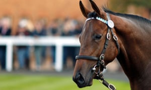 A colt awaiting sale at Tattersalls Yearling Sale