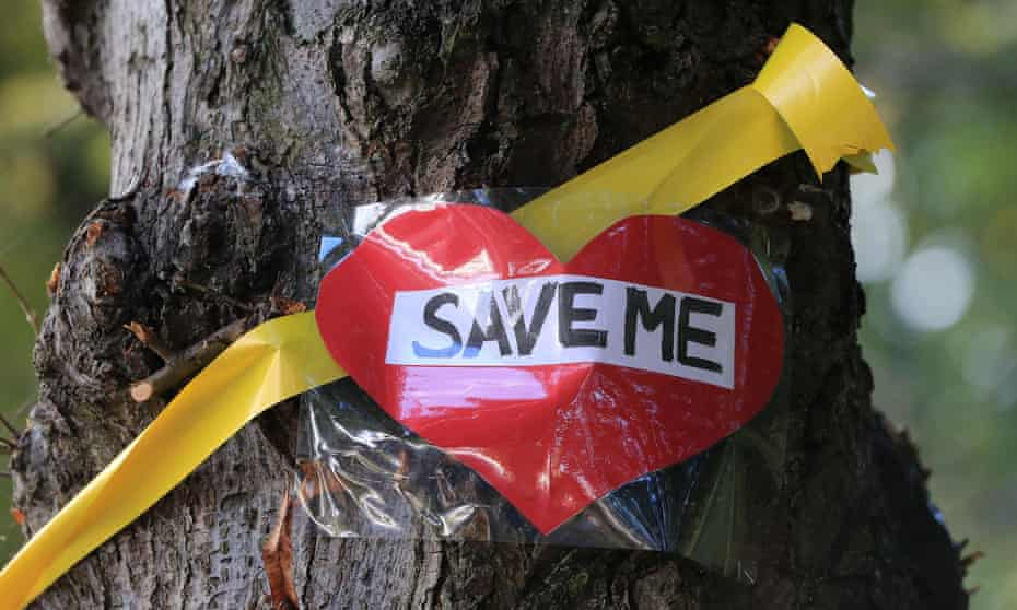A message on a tree in Sheffield