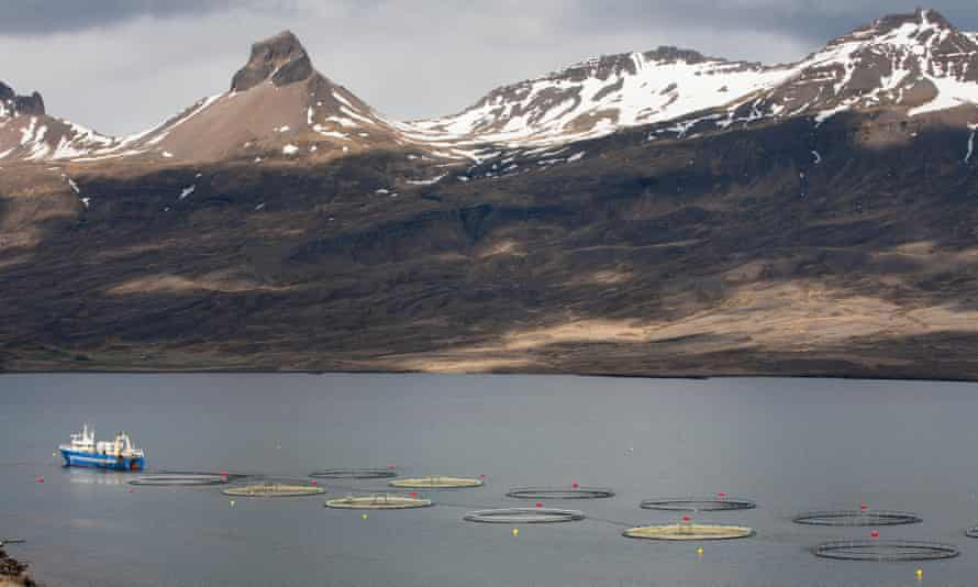 Fish farming in an Icelandic fjord, Iceland. An industry-backed push to increase open net fish farms by five-fold has been met with criticism by campaigners, who believe the move will cause environmental pollution and genetic dilution.