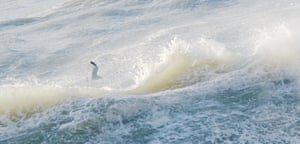 Single Gull, Wave Crests from Sea Journal by Lisa Woollett
