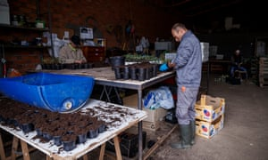 Mario Augusto Godines, 44, originally from Costa Rica, prepares seeds for planting.