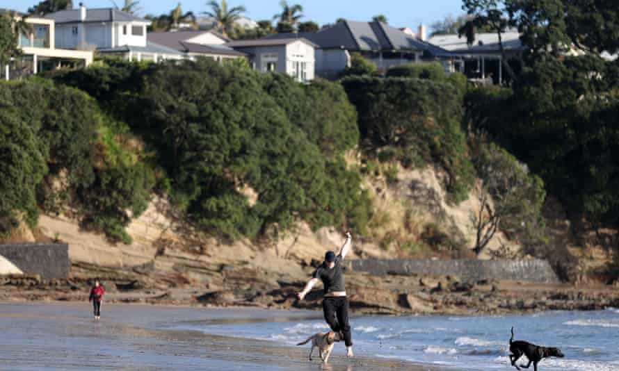 A person and dogs run on Narrow Neck Beach in New Zealand