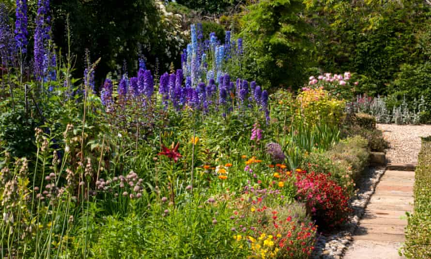 Name that plant: a summer cottage garden.