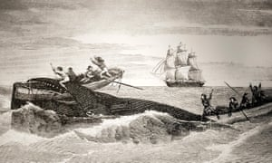 An illustration of sailors attacking a whale