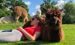 woman and alpaca