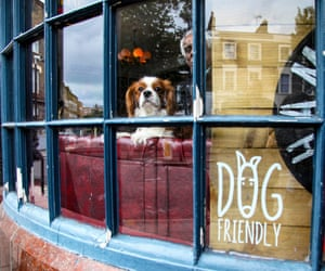 Buster in the Alma, north London