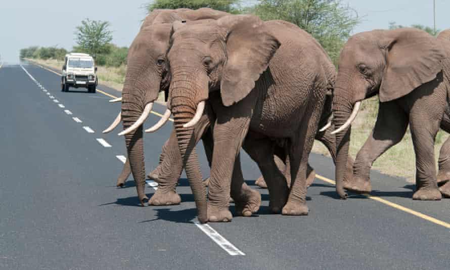 Elephants cross the road near Ngorongoro, Tanzania