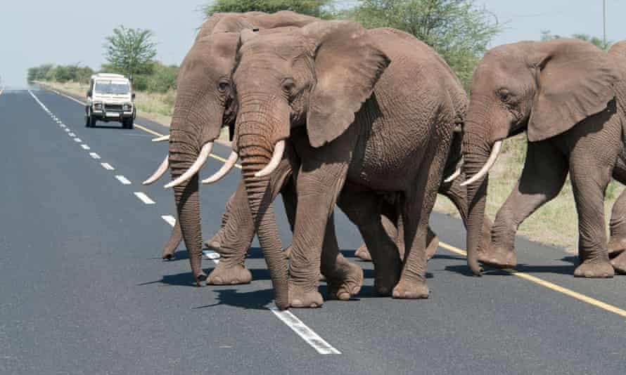 Elephants cross the road to Ngorongoro in Tanzania.
