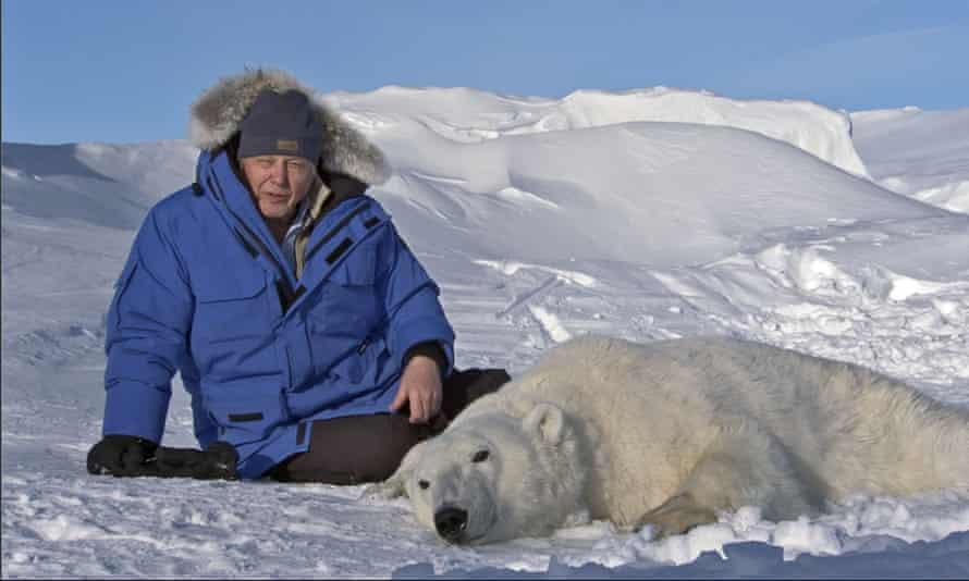Sir David Attenborough with an anaesthetised polar bear in Svalbard.