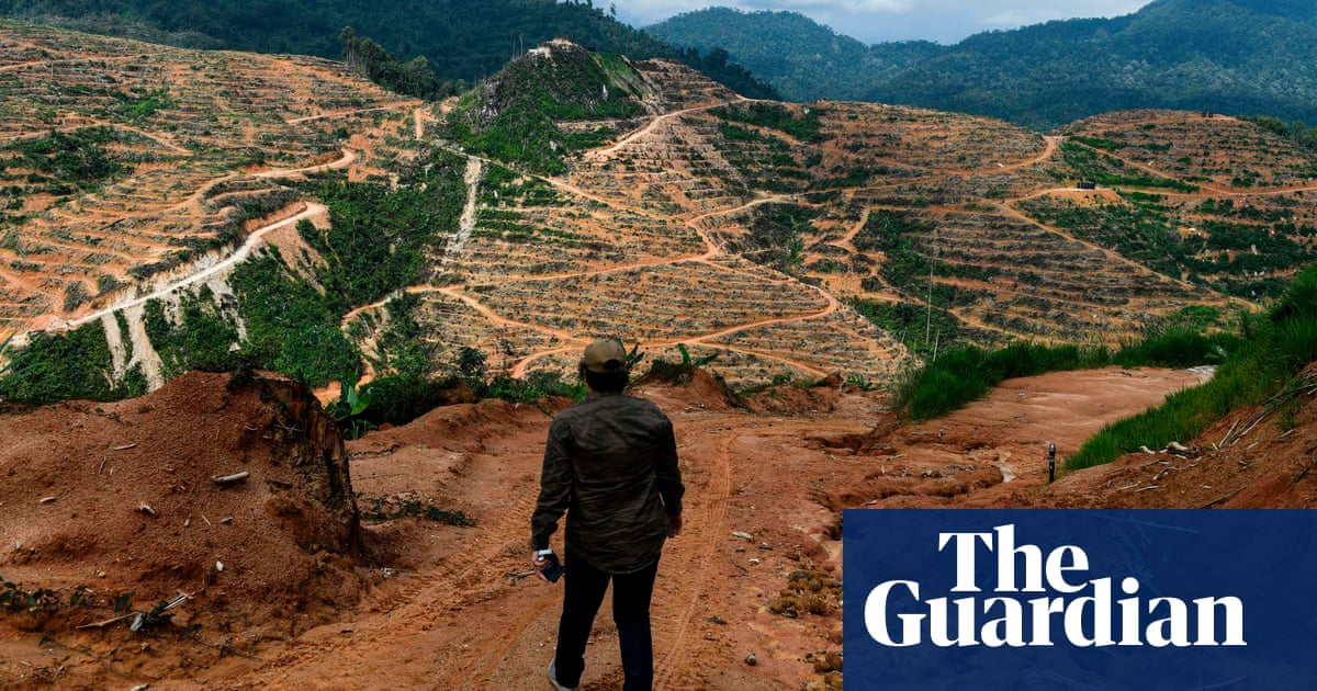 Chinese banks urged to divest from firms linked to deforestation
