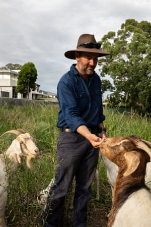 Michael Blewitt with some of his goats at Strathfield girls high school