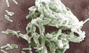 Listeria Monocytogenes