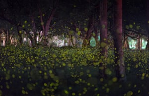 Summer fireflies in a forest near Bangkok city, Thailand