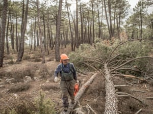 Jose Maria Molina chops down pines near Cobeta. Sawmills and resin were the main economic sources for the region until the last sawmill shut down in 1980.