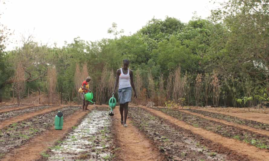 The Leap scheme offers young people based in the Gambia's Upper River Region training in farming, horticulture, auto mechanics and crafts.