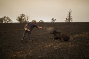 Steve Shipton shoots an injured calf in his paddock after a bushfire in Coolagolite, NSW.