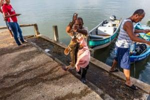 Goliath grouper are unloaded at Punta Gorda fish market