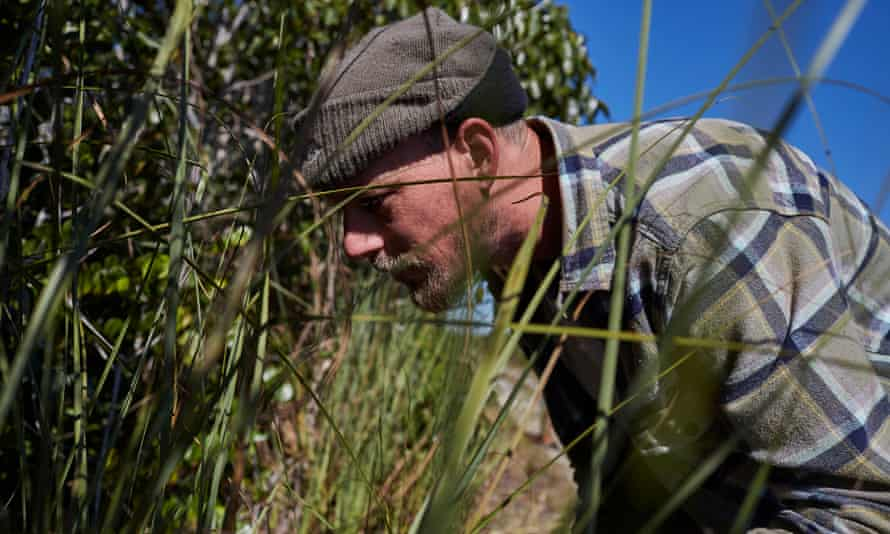 Jim Meyer looks along the side of the path in the grass for a python.
