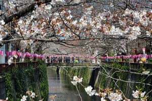 People gaze from a bridge over the Meguro River in Tokyo