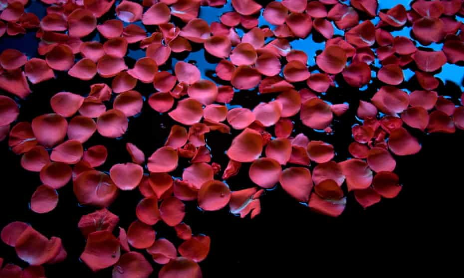 'The blood / that's blossoming, overblown already, / dropping fat petals'