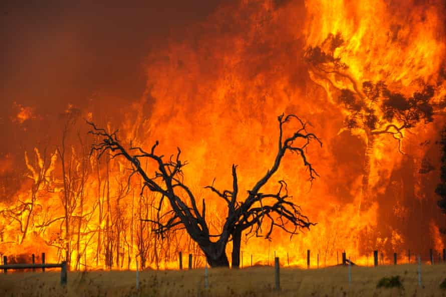A bushfire burns in the Bunyip Sate Forest near the township of Tonimbuk, Victoria, 7 February 2009