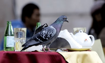 A pigeon on the table of a bar in central Milan