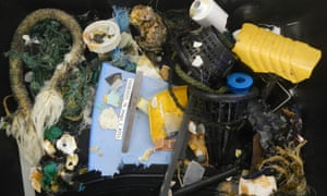 ocean cleanup trawl samples