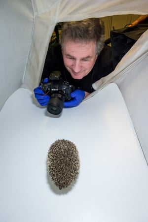 National Geographic fellow Joel Sartore takes a picture of a hedgehog in the Zoo in Wroclaw, Poland. Sartore is the founder of the Photo Ark, a documentary project which aims to save endangered species and habitat.