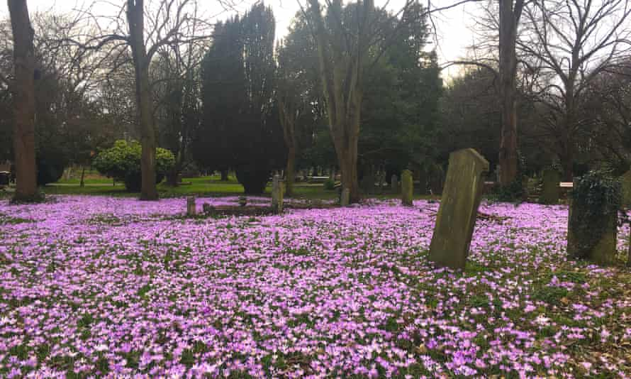 South Ealing Cemetery brighter