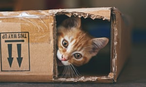 Most cases of feline parvovirus, or the cat plague, are in kittens and young cats.