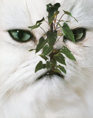 A collage of a cat with plants on its face by Stephen Eichhorn