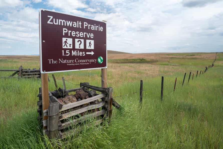 The Zumwalt supports key populations of raptors, songbirds, bees, butterflies and rare native plants, as well as elk herds and other wildlife.