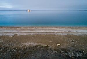 Polar bears on Wrangel Island, Russia.