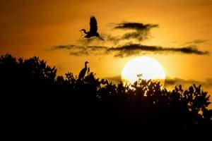 An egret flies over a mangrove at sunrise near Banda Aceh, Indonesia
