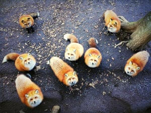 Erica Wu of San Francisco, California was the winner of Animals for her shot of foxes in Japan