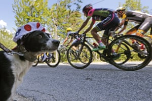 Someone who looks less excitable, maybe even a bit embarrassed, is this dog who's having to wear a cycling cap of the best climber's dotted jersey