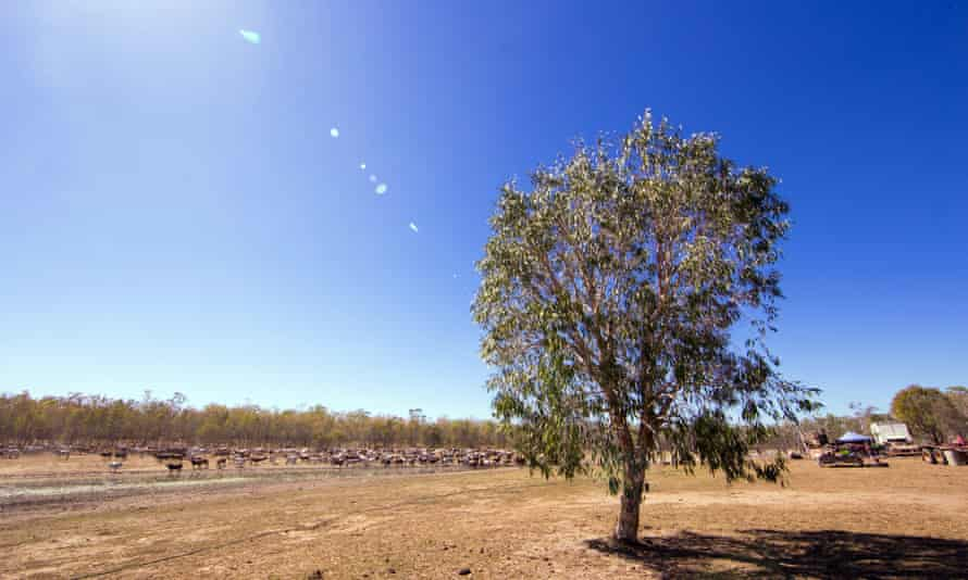 Traditional Olkola land in north Queensland