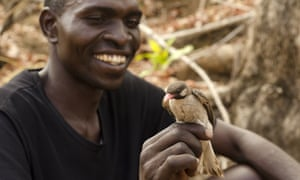 Yao honey-hunter Orlando Yassene holds a male greater honeyguide in the Niassa National Reserve, Mozambique. 'Mutualism like this is quite rare in nature, mostly because natural selection .. is so readily drawn to those that cheat.'