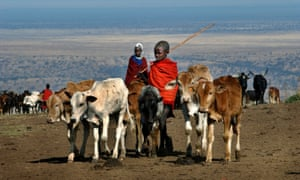 Young Maasai herders with their cattle in Tanzania.