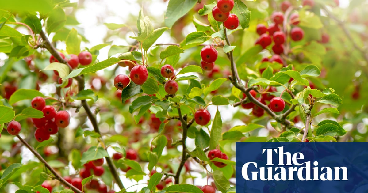 How To Grow Crab Apple Trees Alys Fowler Life And Style The