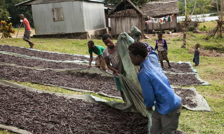 Workers in northern Madagascar spread out vanilla to be dried in the sun