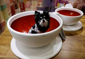 A dog sits inside a model of a coffee cup while its owner prepares to take photos